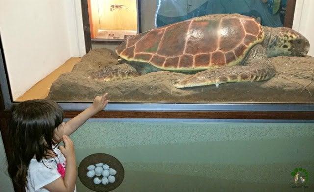 sea turtle and child