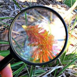 Colour Hunt In Nature – Montessori Outdoor Explorations