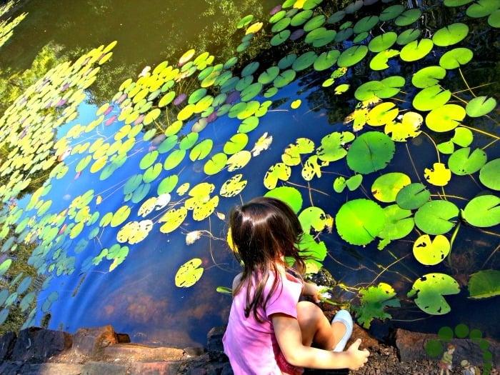 Colour hunt Pond - Montessori Outdoor Classroom