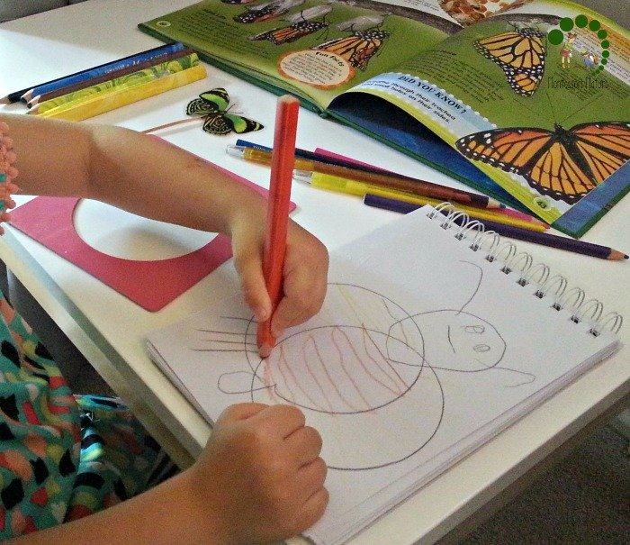 drawing butterfly with the metal insets
