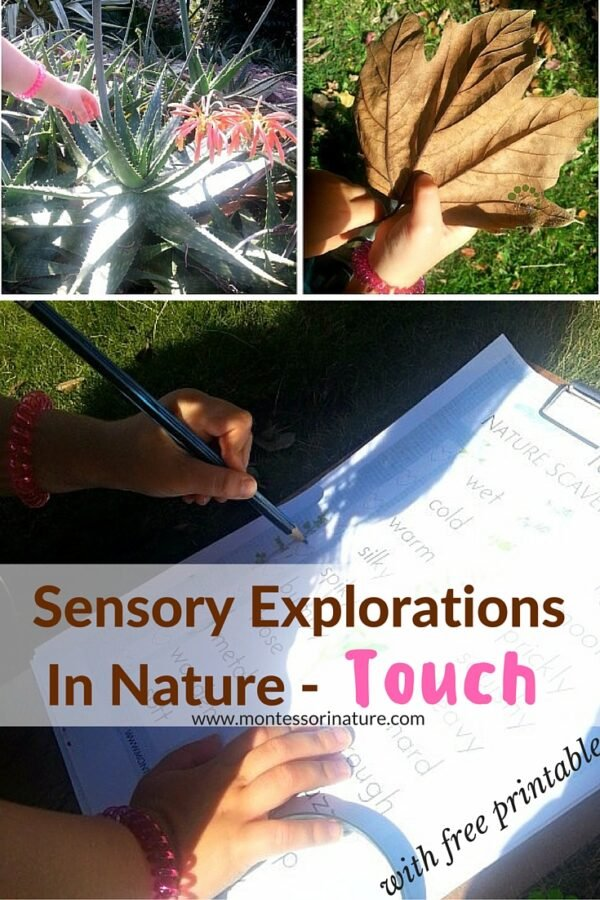 Sensory Explorations In Nature - Touch