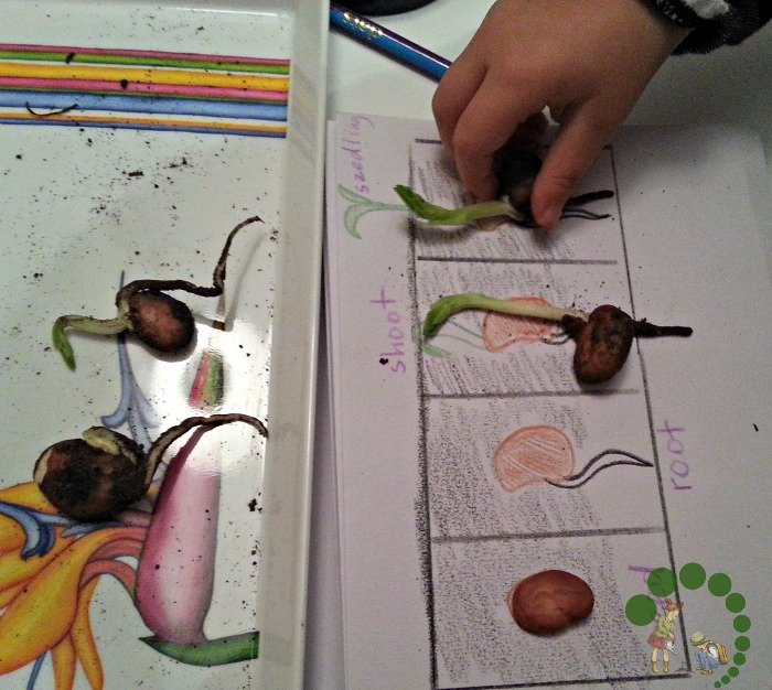 Learning about a plant Montessori Nature Blog @