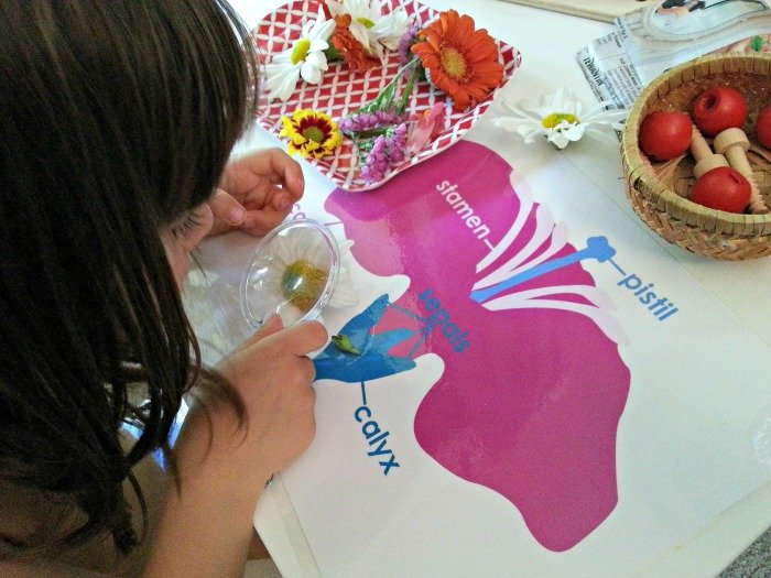learning-about-flower-montessori-activities