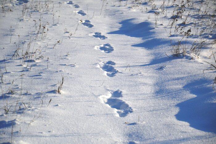 animal-tracks-1858350_960_720