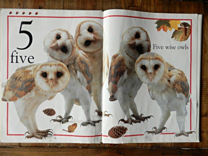 Baby and toddler real size animals book
