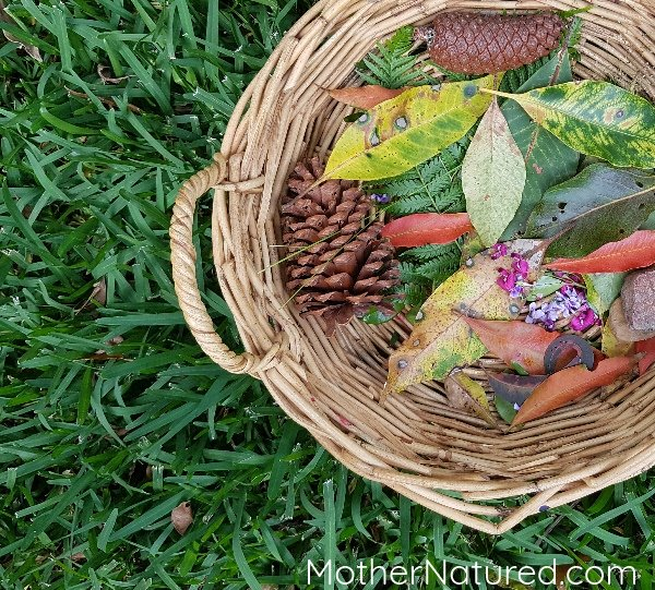 Collect Natural Materials