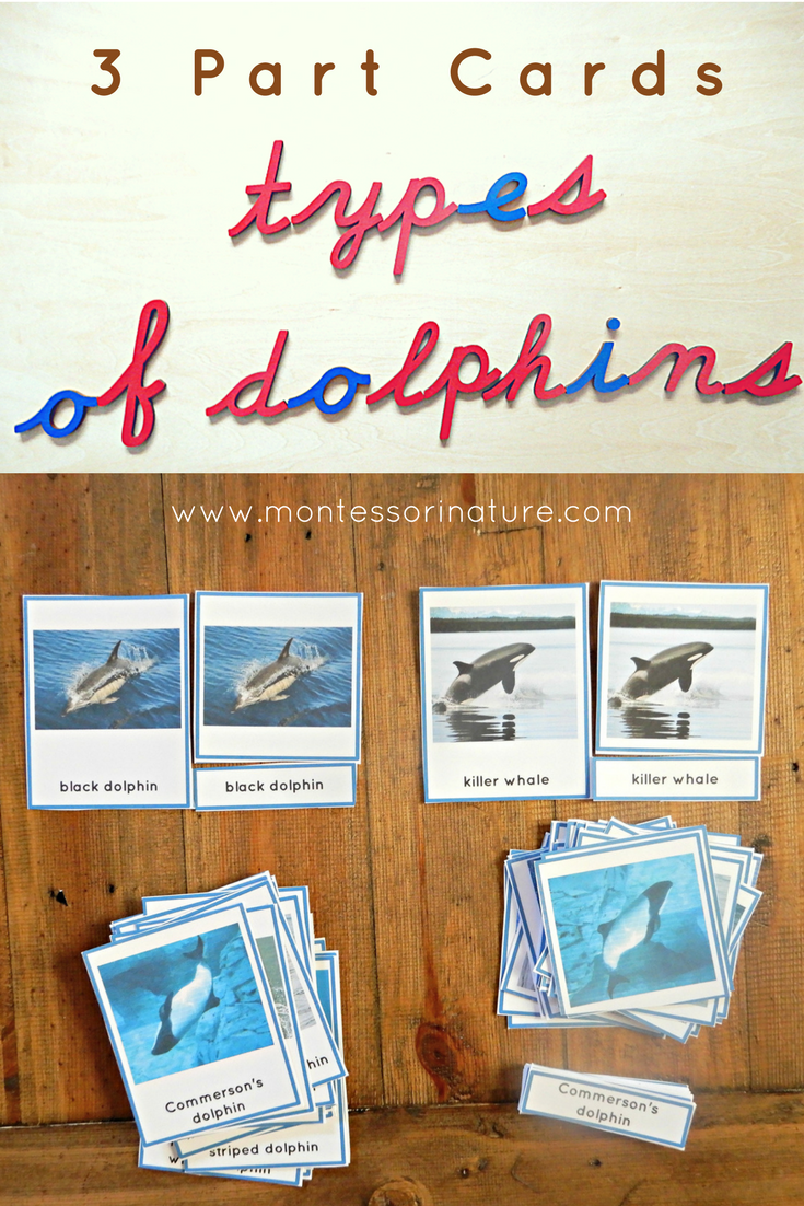 Montessori 3 Part Cards types of dolphins montessori nature
