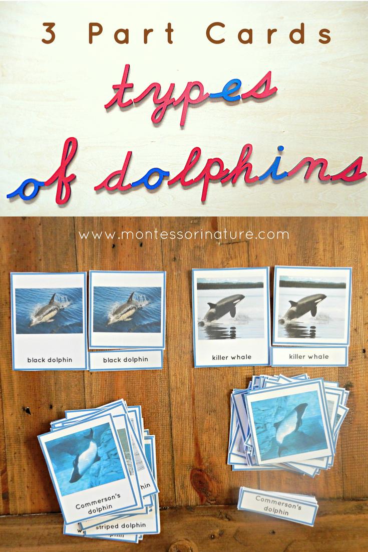 Montessori 3 Part Cards types of dolphins montessori nature