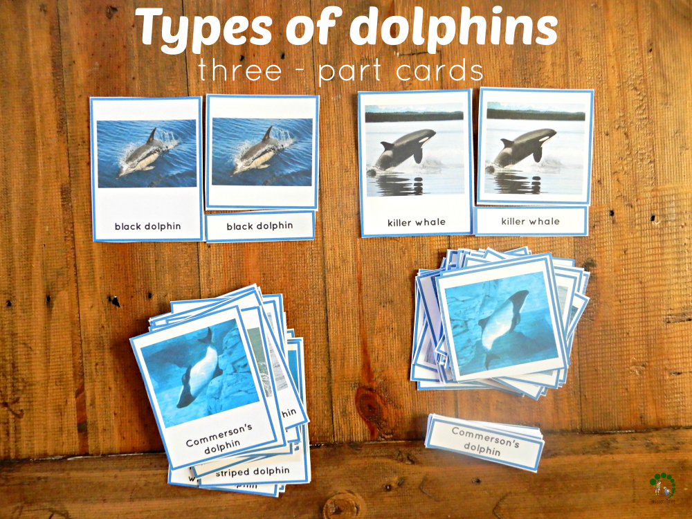 types of dolphins montessori nature main