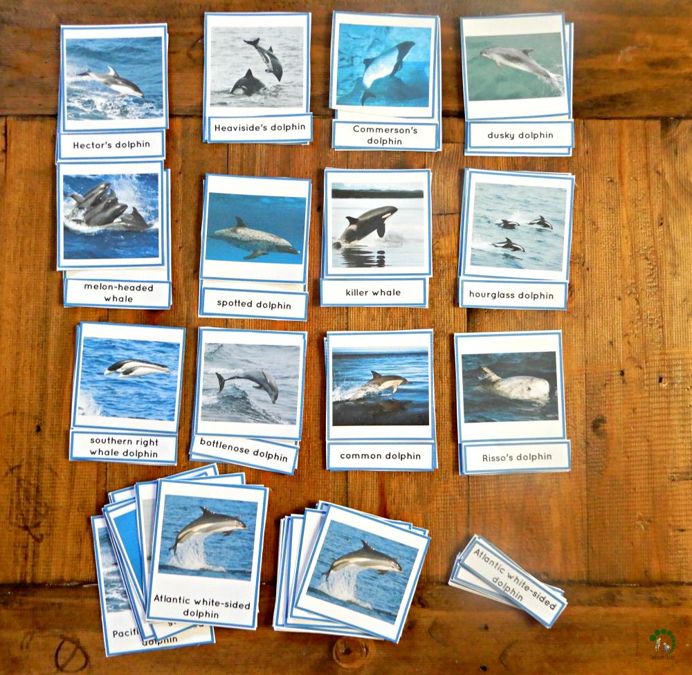 types of dolphins montessori nature