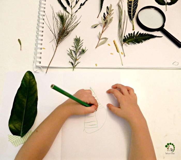 botany Montessori Nature