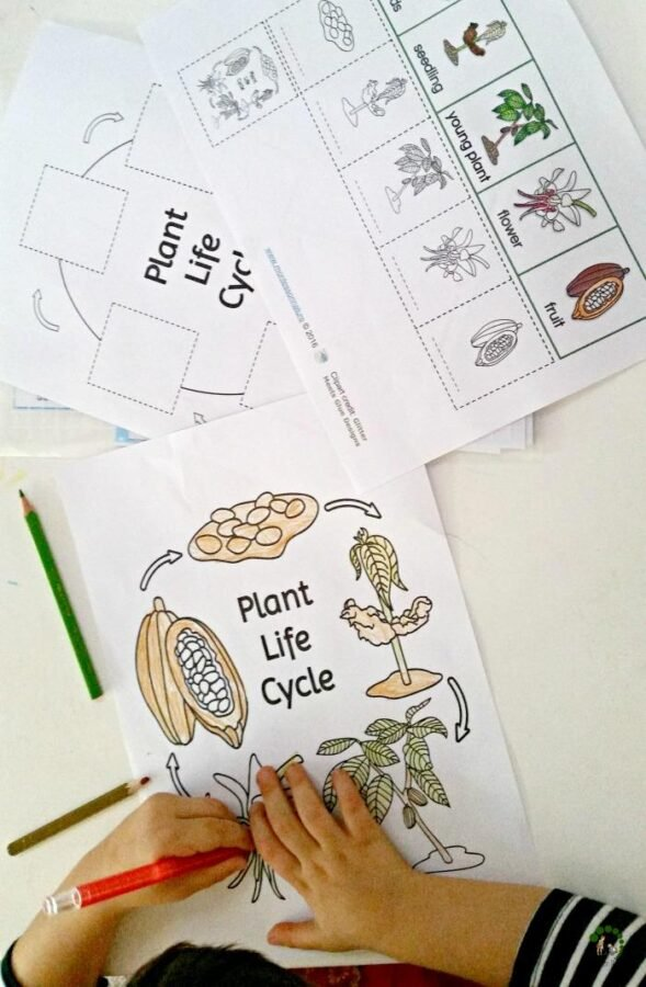 plant life cycle hands on materials printable Montessori Nature