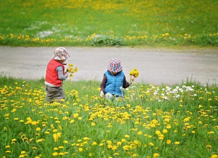 pick-flowers-785111_960_720