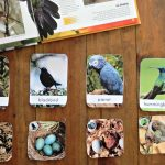 Learning About Birds in the Montessori Preschool Classroom