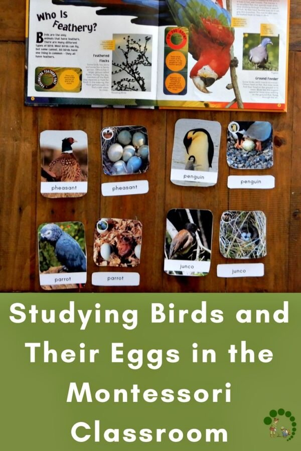 Printable cards and a book with types of birds