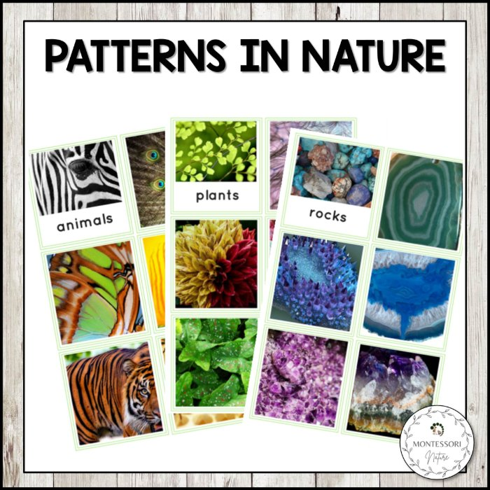 buy patterns in nature printables