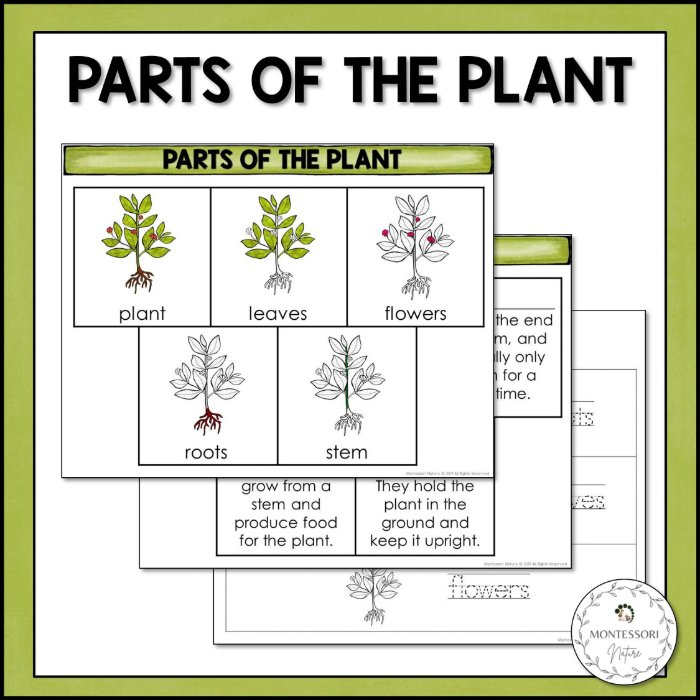 Buy parts of the plant printable