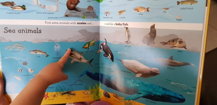 a child pointing at a fish illustration in a children's book
