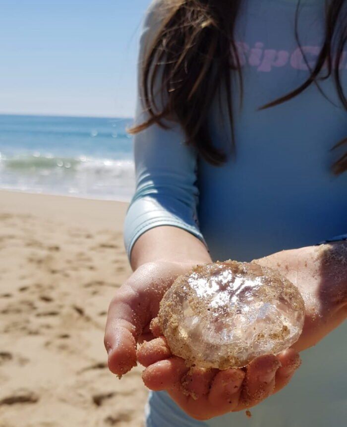 A child in a swimming suit on the beach holding a jelly fish