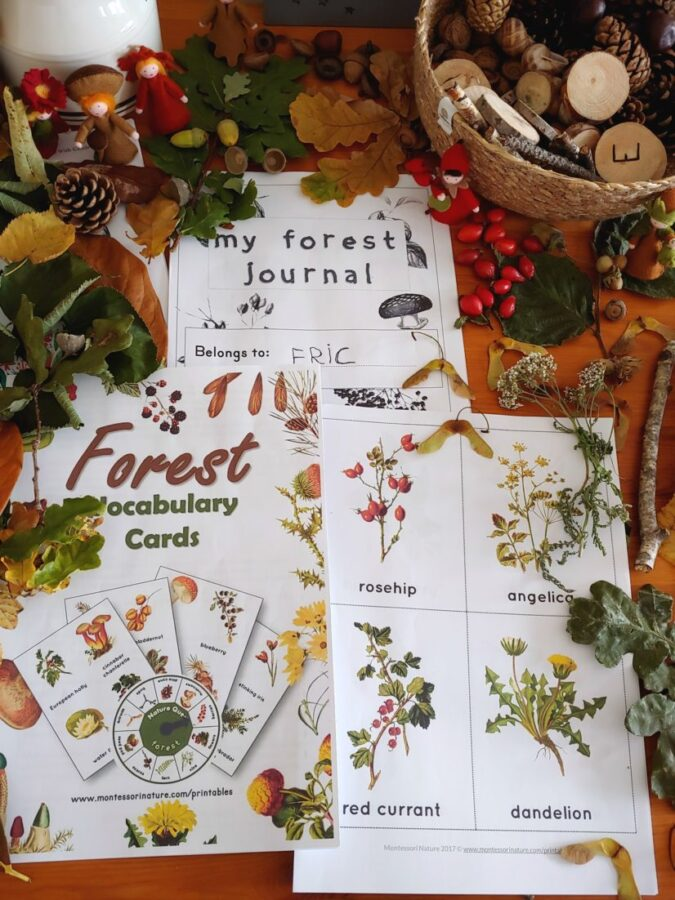 Nature loose parts forest cards with pictures and labels
