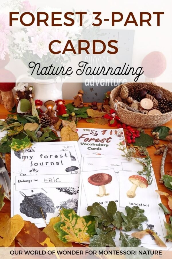 Pin the Forest Cards and Nature Journaling post