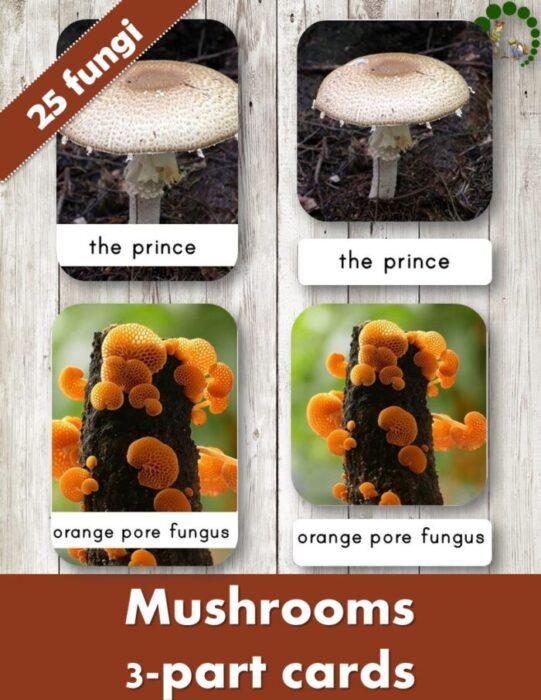 Buy mushroom 3 part cards