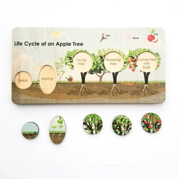 Wooden puzzle with life cycle of an apple tree with round wooden colored chips