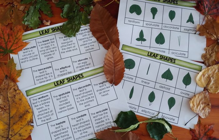 Learning about Leaves with Leaf Printables