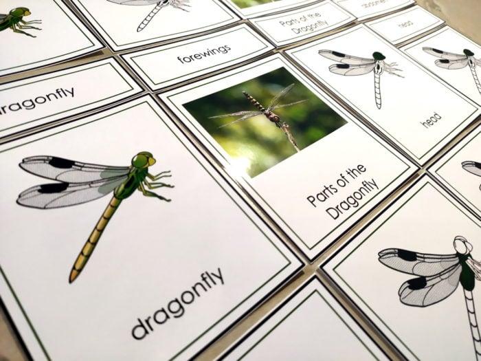 dragonfly printables