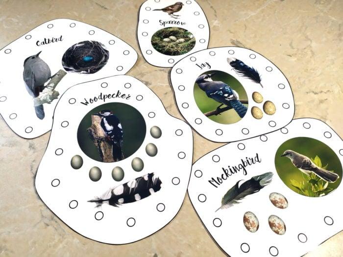 Bird themed lacing cards