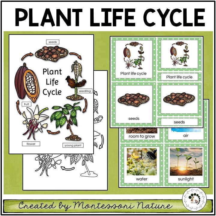 Buy plant life cycle printable