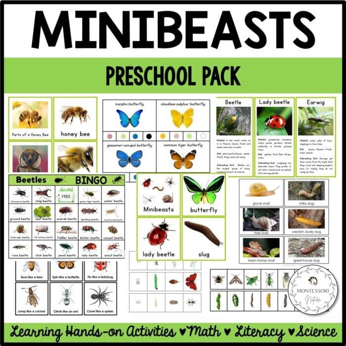 Buy the minibeasts preschool pack