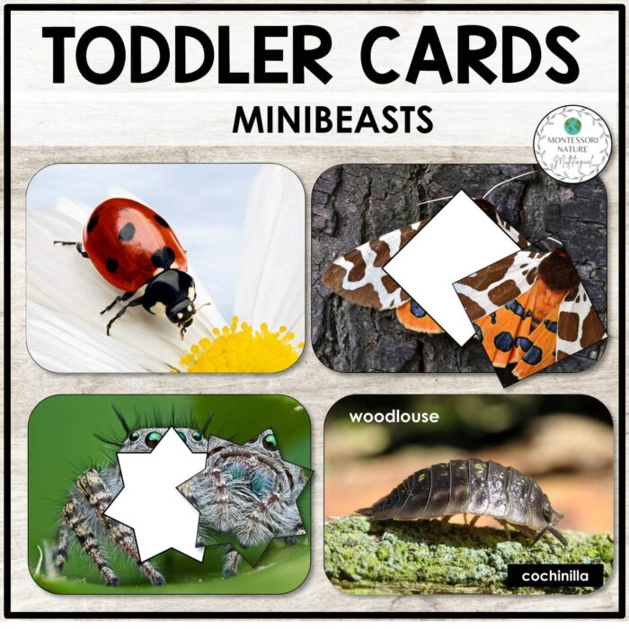 Buy toddler cards with minibeasts