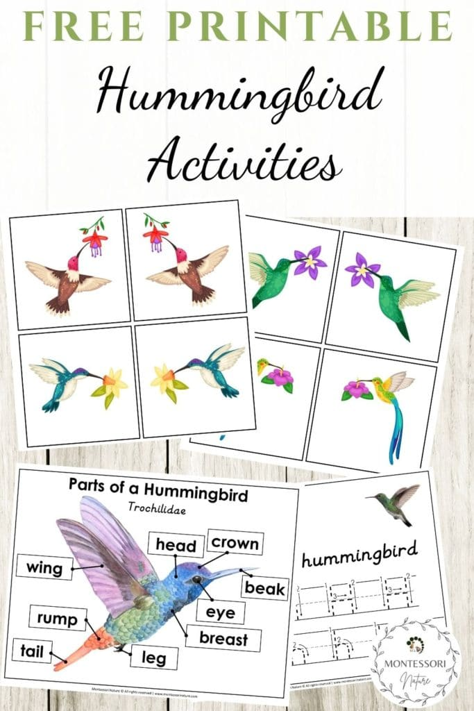 Pin image - Printable pages for preschool students that are included in the printable - coloring, hanrdwriting, parts of a humming bird printables.