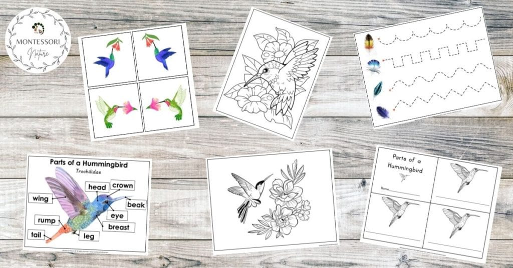 Printable pages for preschool students that are included in the printable - coloring, hanrdwriting, parts of a humming bird printables.