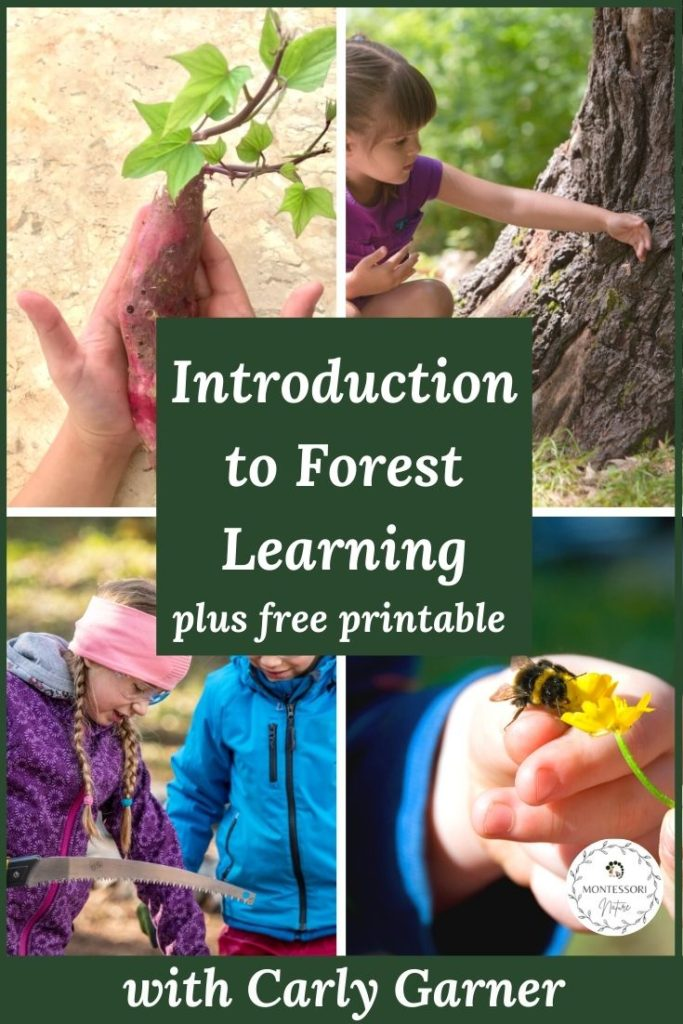 Children playing in nature. Pin the post - Introduction to Forest Learning with Free Printables