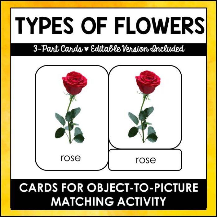 Buy safarti toob cards