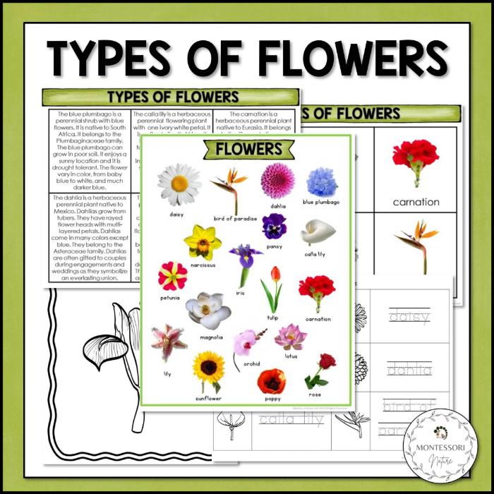 Buy Types of Flowers printable