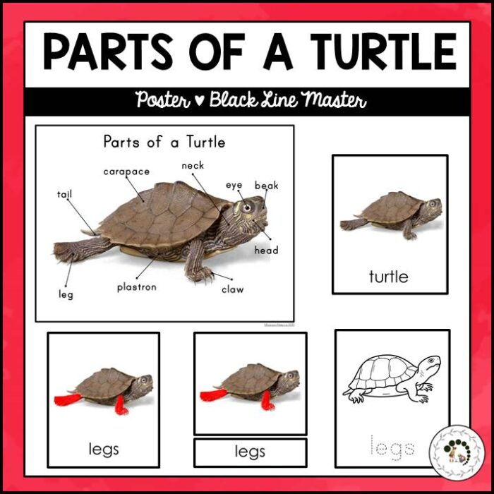 Buy parts of a turtle printable