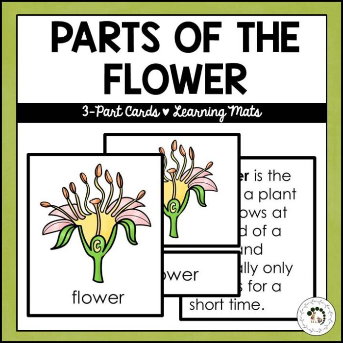 Buy parts of the flower printable