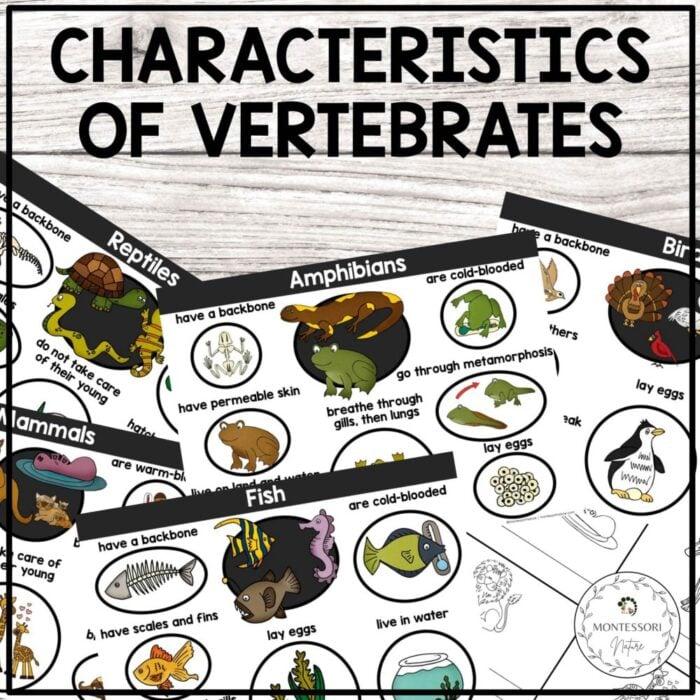 Purchase characteristics of vertebrates printable