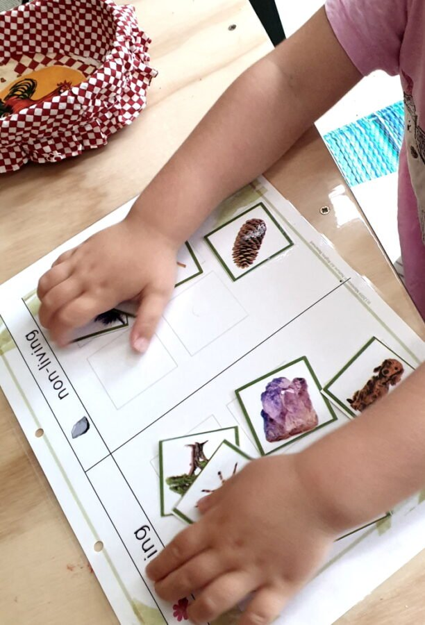 A child sorting living and non living things with cards