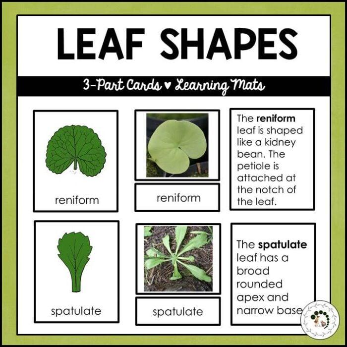 Buy leaf shapes printable
