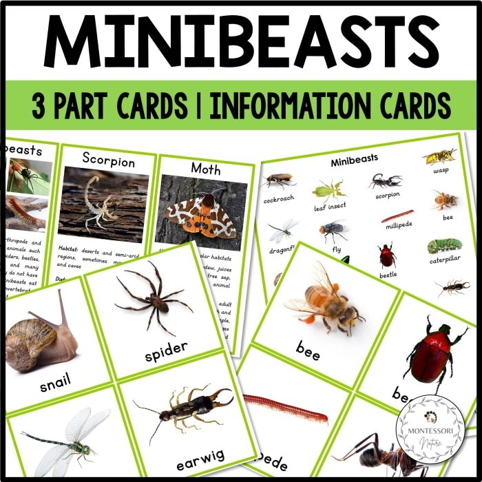 Purchase Minibeasts 3 part cards and information cards