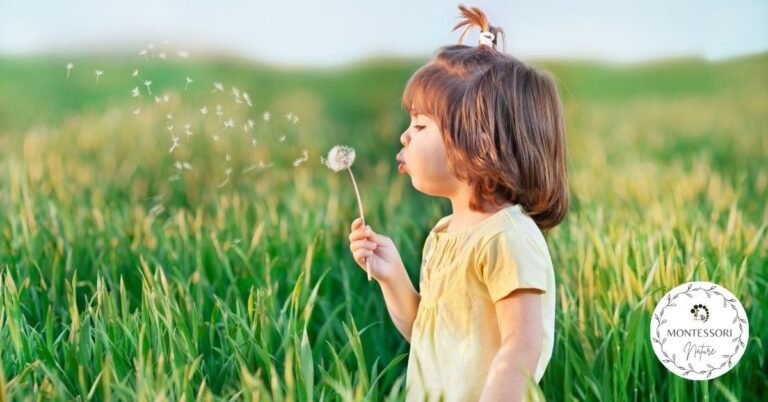 A girl outdoors in the field blowing white seeds of dindelion dandelion