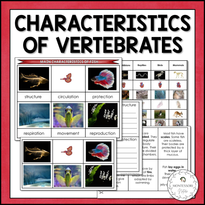 Purchase the Characteristics of Vertebrates printable