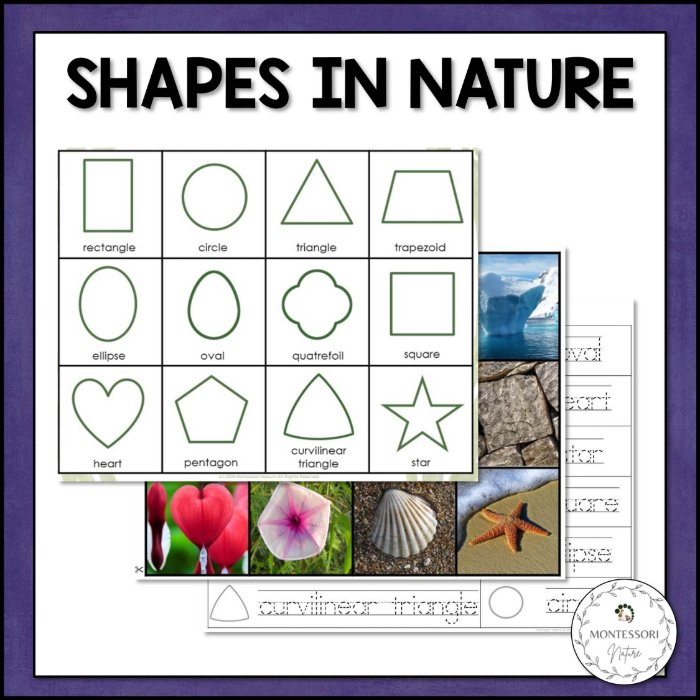 buy shapes in nature printables