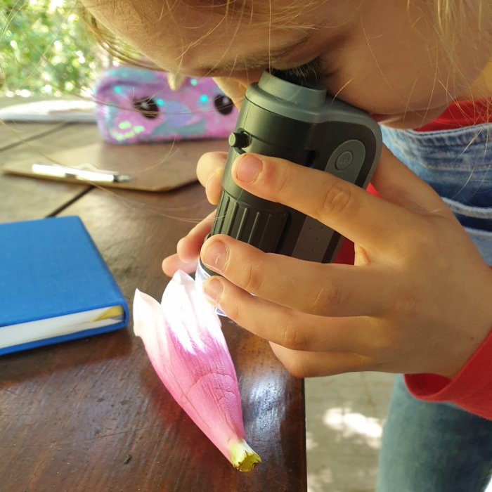 A child looking through an outdoor microscope at a pink flower.
