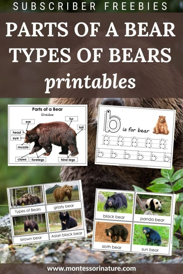 Parts of a Bear and Types of Bears Free Printables