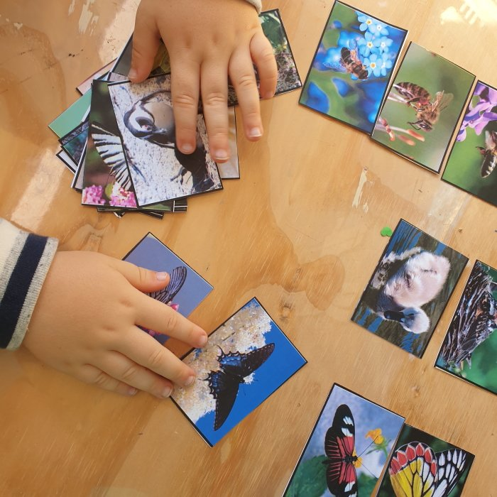 Sorting activity - bee, butterfly, bird - Montessori Nature cards